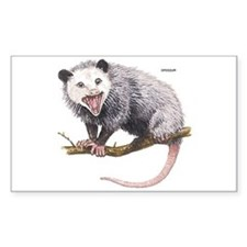 Opossum Possum Animal Decal