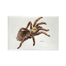 Tarantula Spider Rectangle Magnet (100 pack)