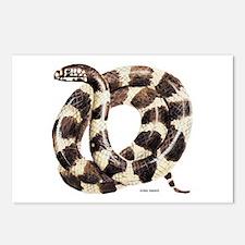 King Snake Postcards (Package of 8)
