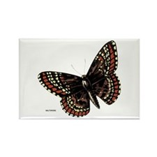 Baltimore Butterfly Rectangle Magnet (10 pack)