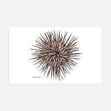 Sea Urchin Wall Decal