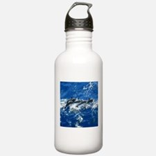Pan Tropical Dolphins Water Bottle