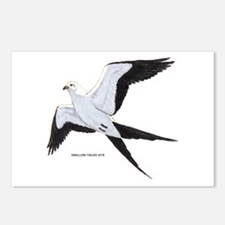 Swallow-Tailed Kite Bird Postcards (Package of 8)