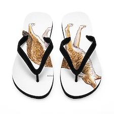Coyote Wild Animal Flip Flops