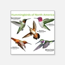 Hummingbirds of North America Sticker