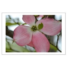 Pink Dogwood Flower Posters