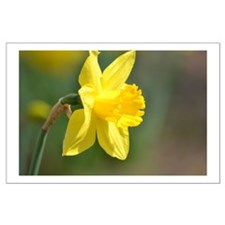 Yellow Daffodil Posters