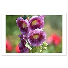 Hollyhock Flowers Posters