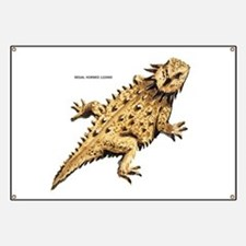 Regal Horned Lizard Banner