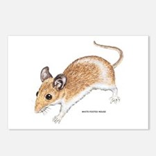 White-Footed Mouse Postcards (Package of 8)