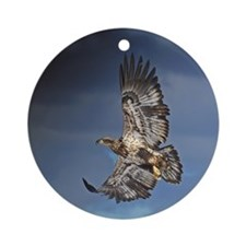Immature Bald Eagle Ornament (Round)