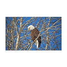 Magnificent Bald Eagle Rectangle Car Magnet
