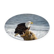Bald Eagle Homer Alaska Oval Car Magnet