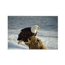 Bald Eagle Homer Alaska Rectangle Magnet