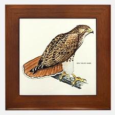 Red-Tailed Hawk Bird Framed Tile