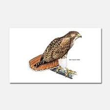 Red-Tailed Hawk Bird Car Magnet 20 x 12
