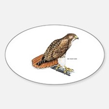 Red-Tailed Hawk Bird Decal