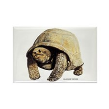 Galapagos Tortoise Rectangle Magnet