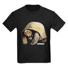 Galapagos Tortoise T