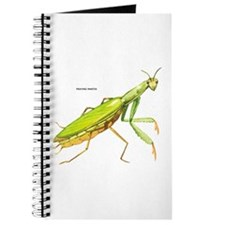 Praying Mantis Insect Journal