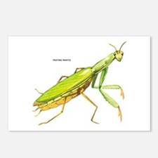 Praying Mantis Insect Postcards (Package of 8)