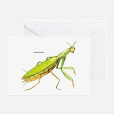 Praying Mantis Insect Greeting Card