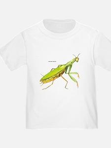 Praying Mantis Insect T