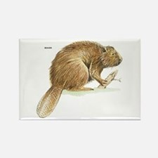 Beaver Animal Rectangle Magnet
