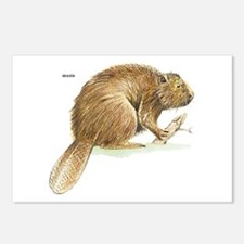 Beaver Animal Postcards (Package of 8)