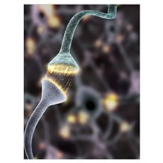 Nerve synapse, artwork Poster