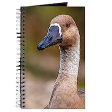 wild wetland goose Journal