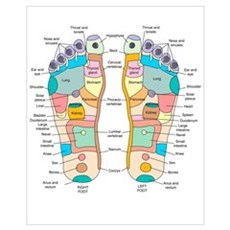 Reflexology foot map, artwork Canvas Art