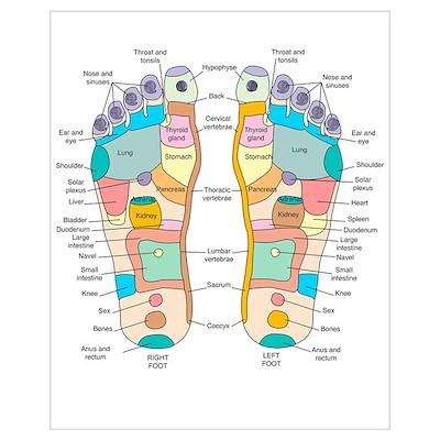Reflexology foot map, artwork Poster