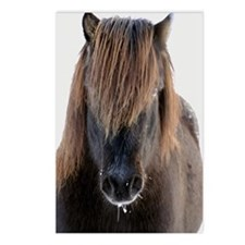 The pony Postcards (Package of 8)