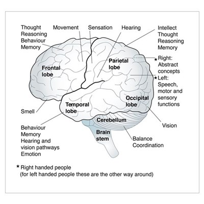 Functional areas of the brain, artwork Poster