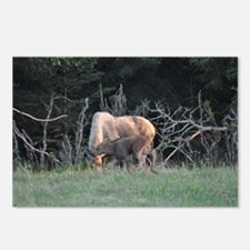 Mother Moose and Calf Postcards (Package of 8)