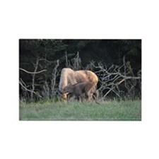 Mother Moose and Calf Rectangle Magnet