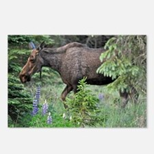 Stolling Moose Postcards (Package of 8)