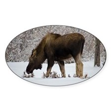 Hungry Moose Decal