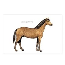 American Quarter Horse Postcards (Package of 8)