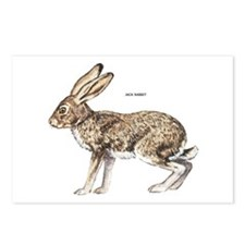 Jack Rabbit Postcards (Package of 8)