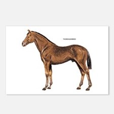 Thoroughbred Horse Postcards (Package of 8)