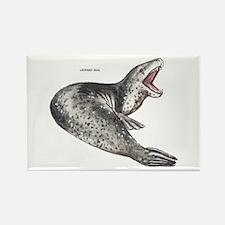 Leopard Seal Rectangle Magnet