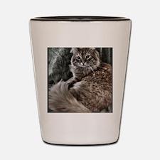 The Cat Shot Glass