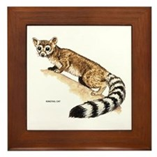 Ringtail Wild Cat Framed Tile
