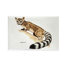 Ringtail Wild Cat Rectangle Magnet