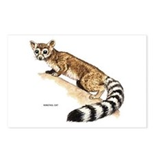 Ringtail Wild Cat Postcards (Package of 8)