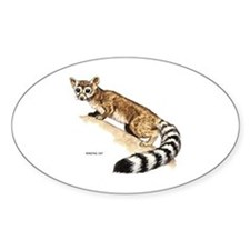 Ringtail Wild Cat Decal