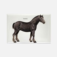 Percheron Horse Rectangle Magnet