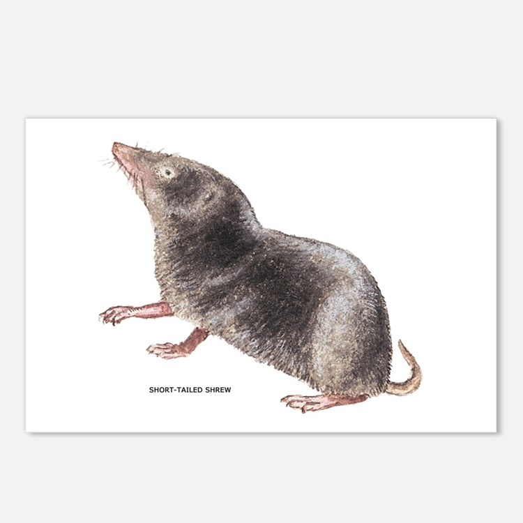 Short-Tailed Shrew Postcards (Package of 8)